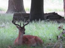 bambi too