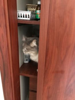 polly in the closet
